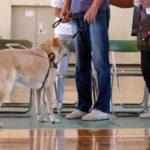 知って納得!盲導犬に英語で指示を出す理由とは??